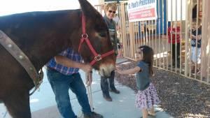 Jane the Mule visit (3)
