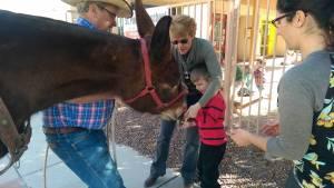 Jane the Mule visit (5)